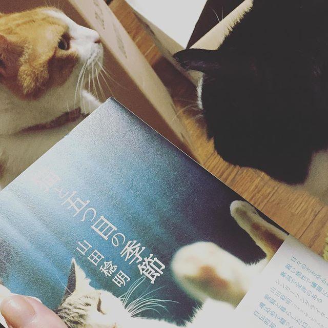 warabimochi_rabi.jpg